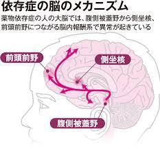 【依存Brain】 女性を依存状態にさせるための原理原則、感情操作テクニック【価値観を書き換えるコニュニケーション理論】